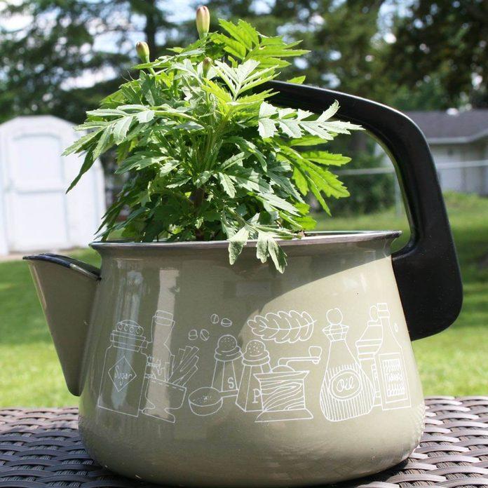 tea pot flower planter