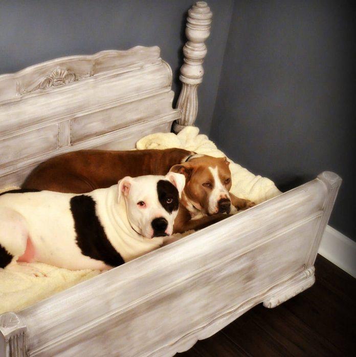 Upcycled Dog Bed