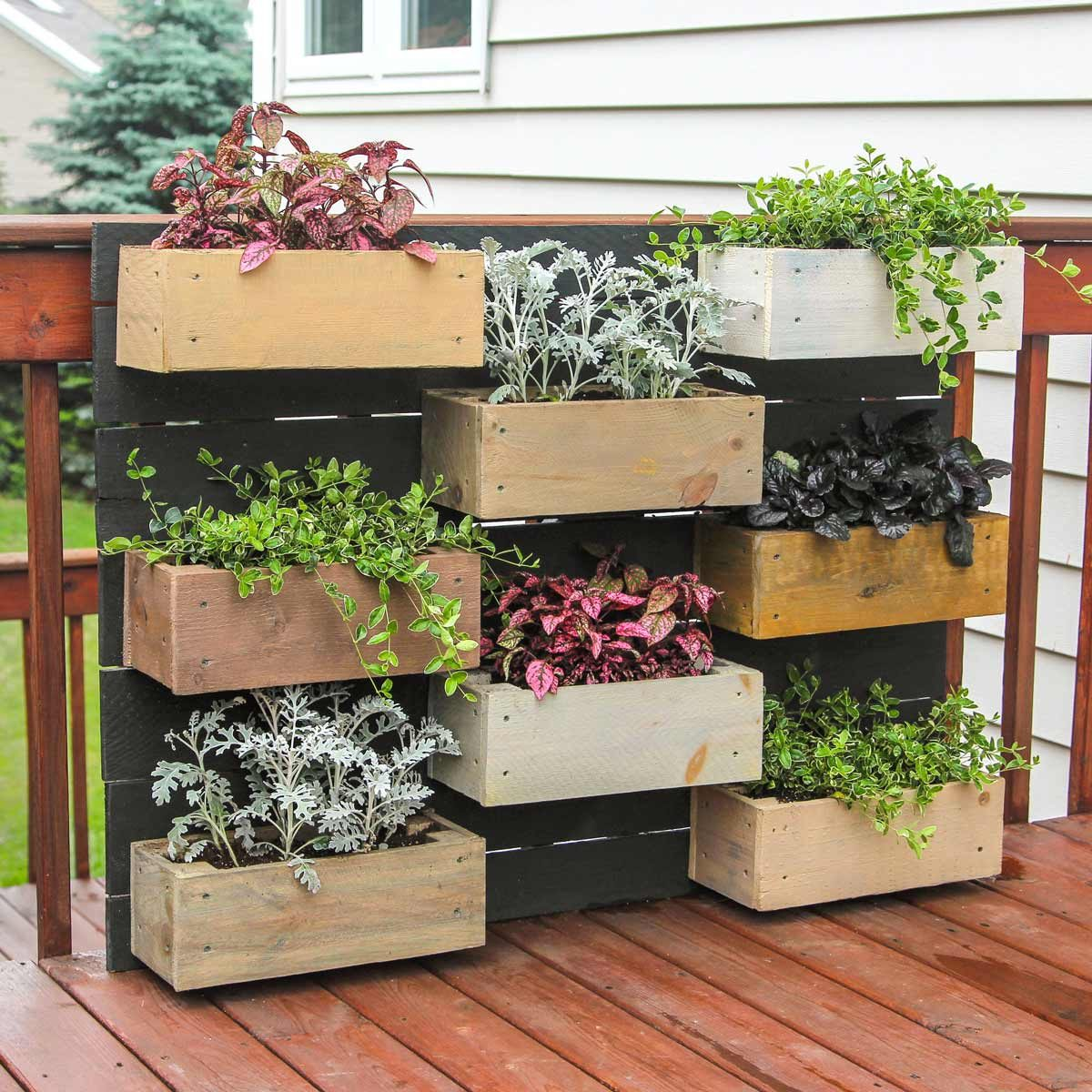 wall plant boxes