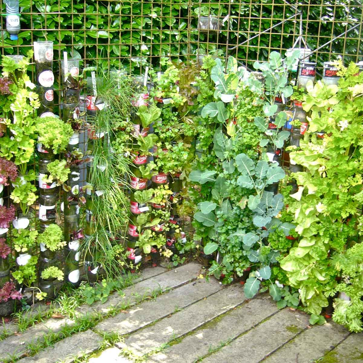 plant flower wall