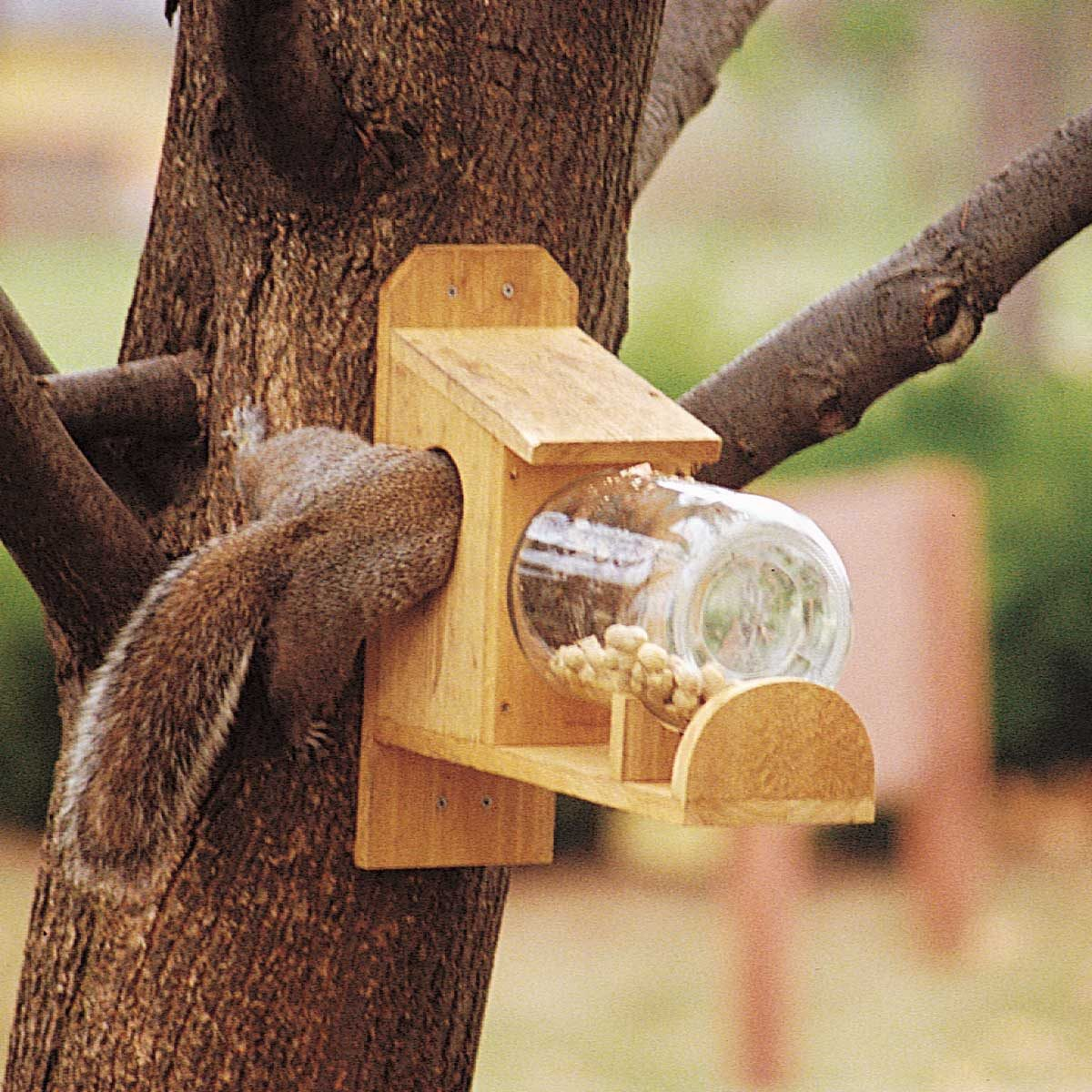 entertaining squirrel feeder half way