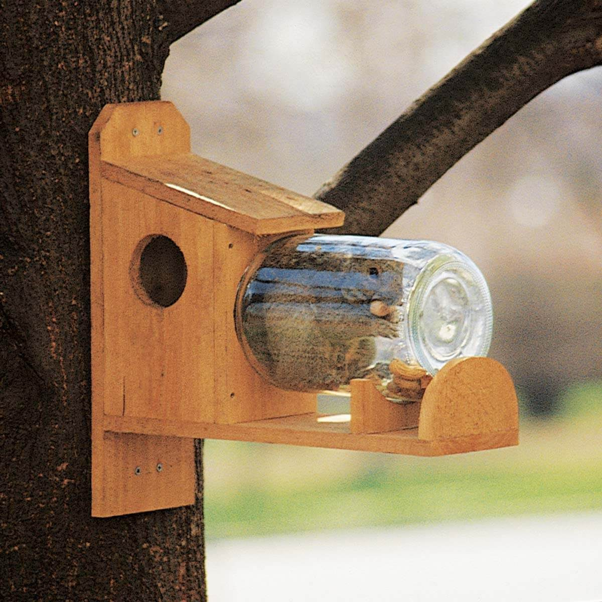 entertaining squirrel feeder inside