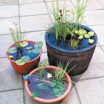pint sized water gardens