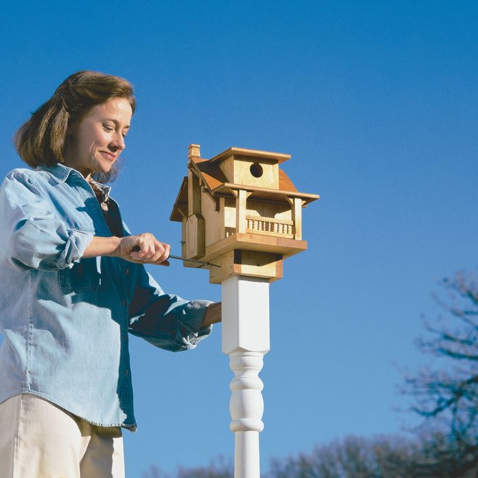 install birdhouse post