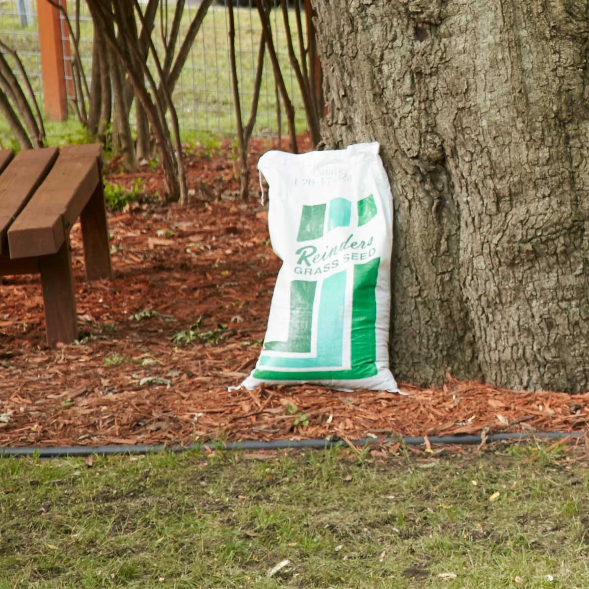 lawn seed buy grass seed