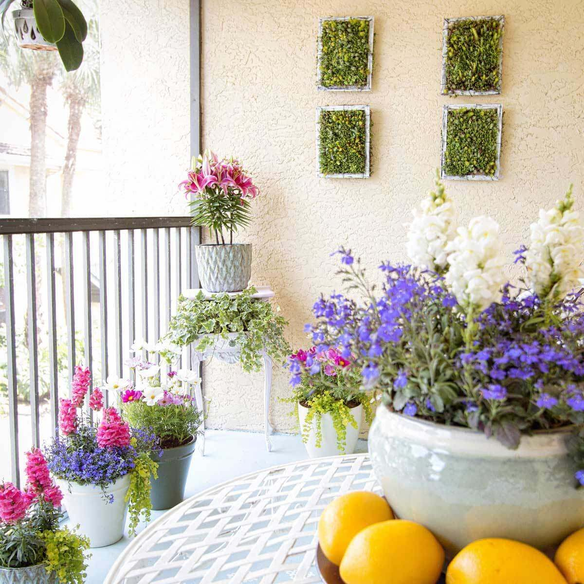 container plants Colorful annuals brighten an outdoor living space