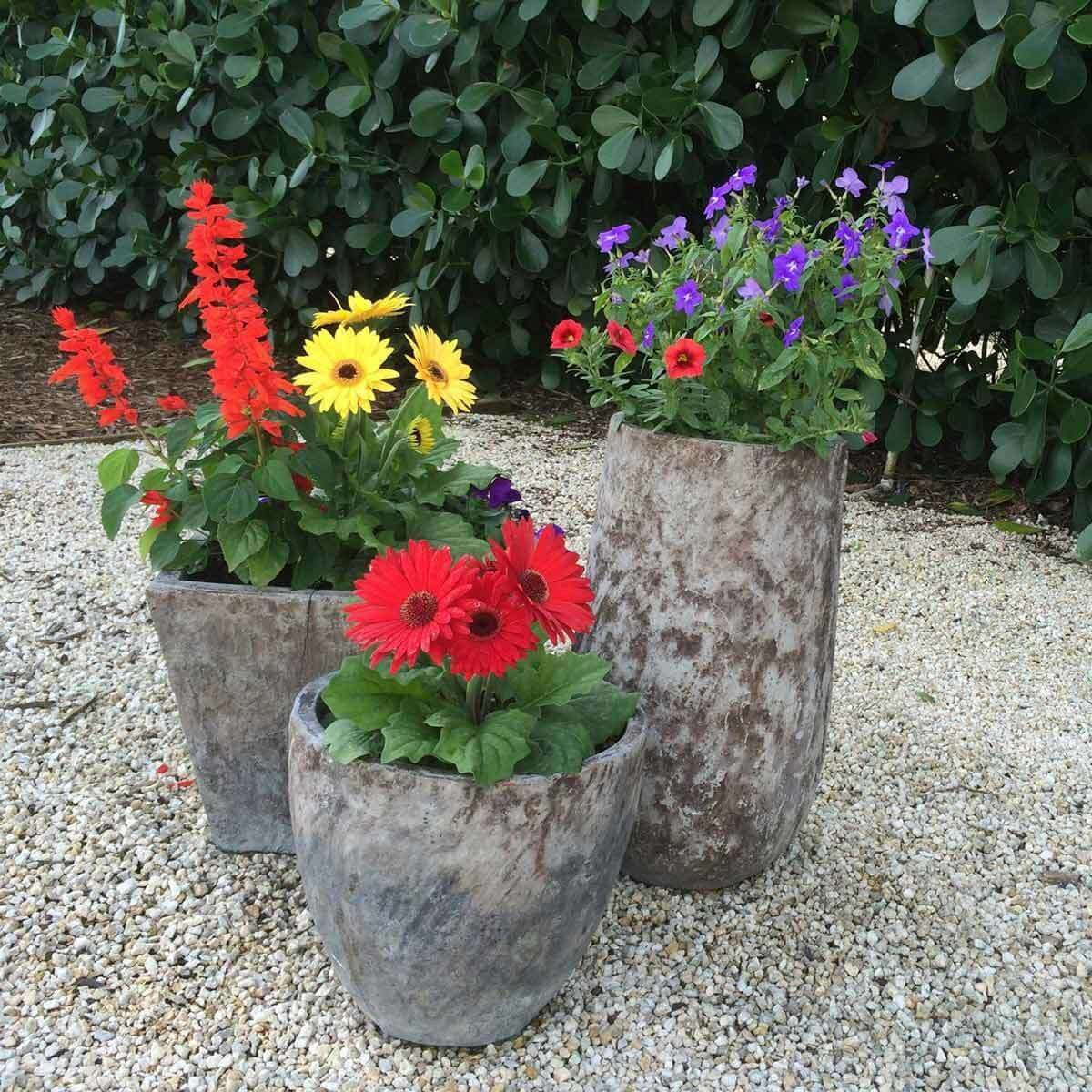 Potted Panache flowers