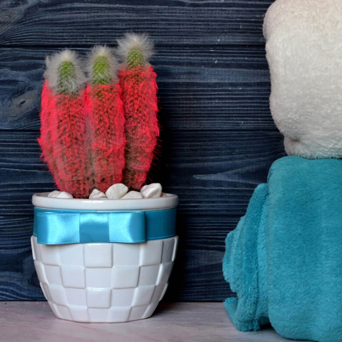 red furry cactus