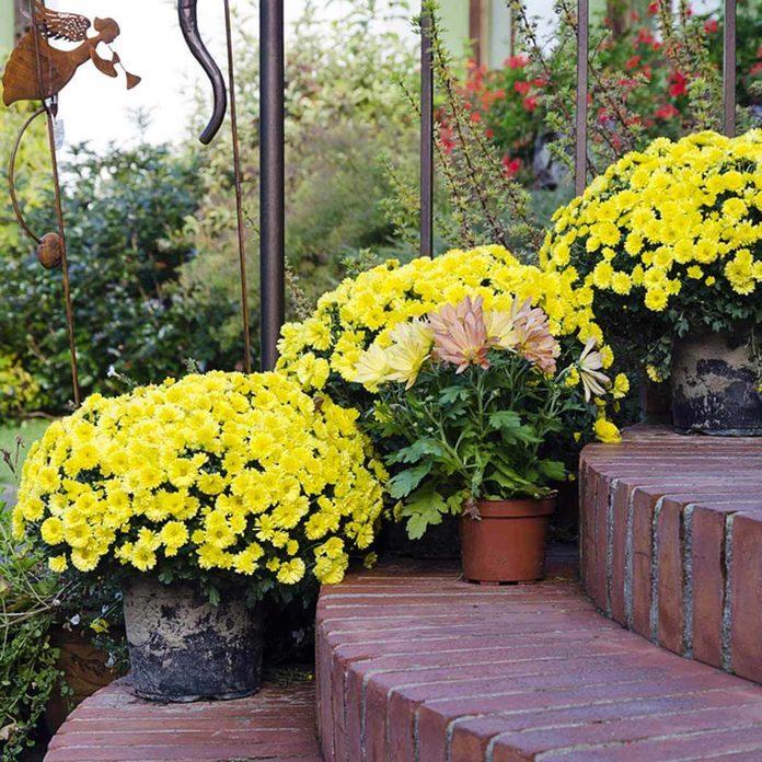 flower pots yellow brick steps