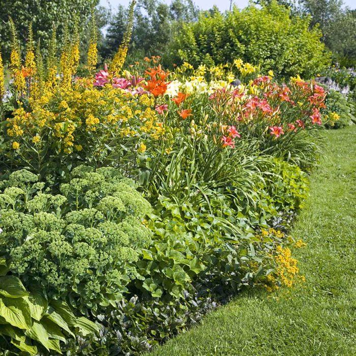 perennial flower bed