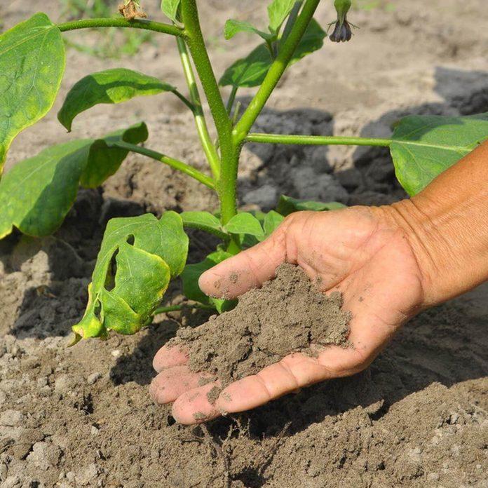 Test Soil gardening