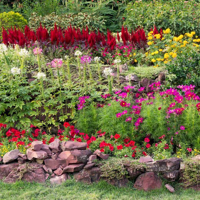 flower bed garden