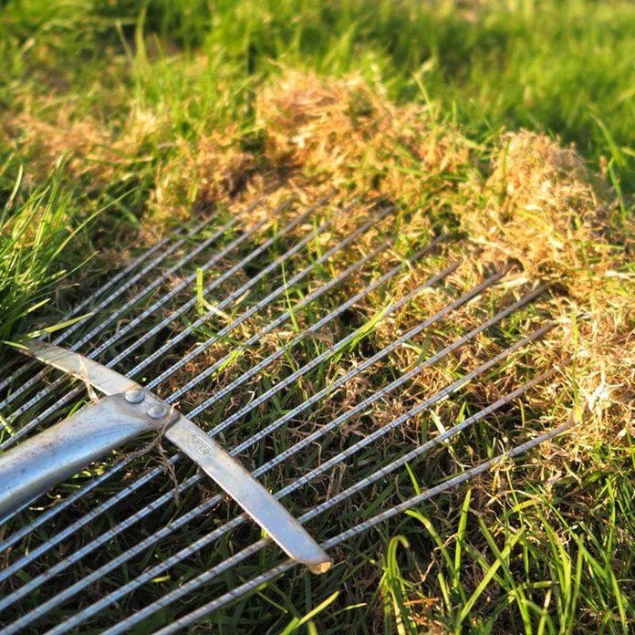 Rake or Dethatch Lawn