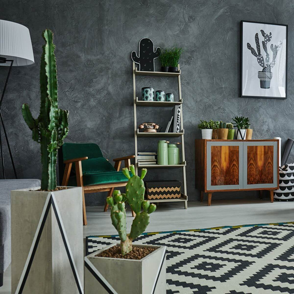 Tall Cacti living room cactus