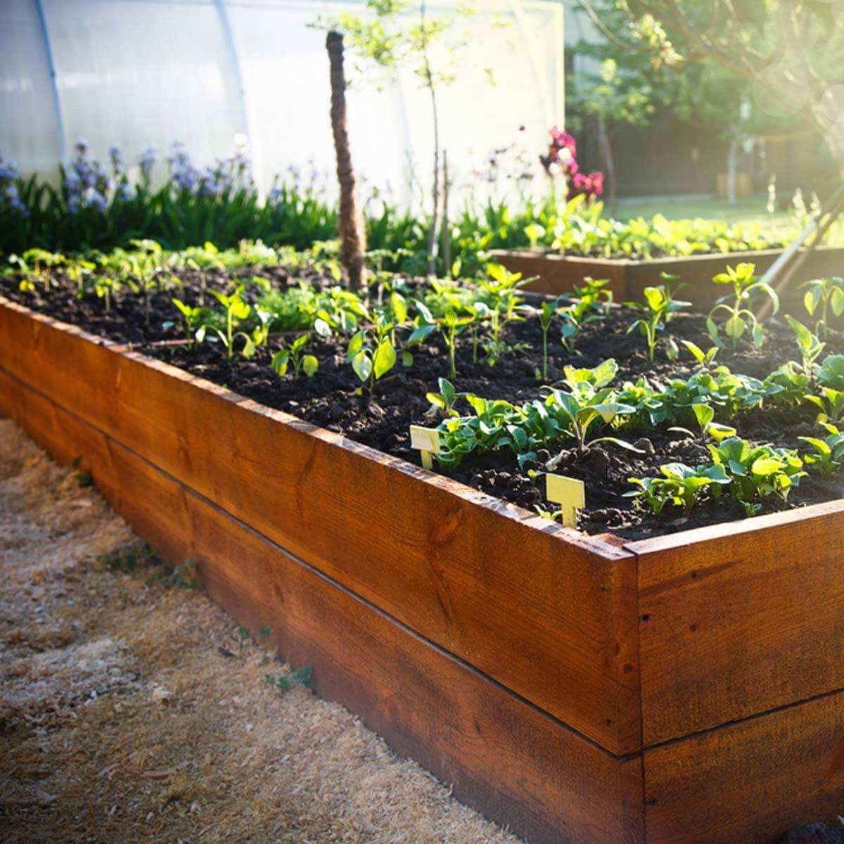 raised plant beds keep animals out of garden