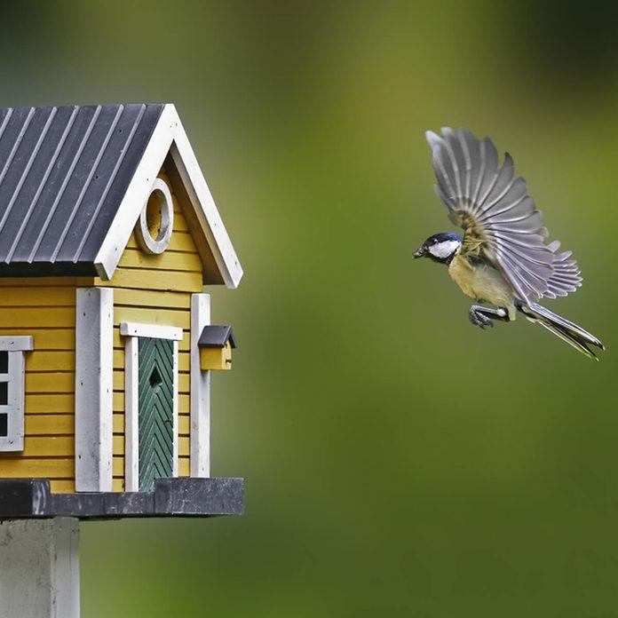 birdhouse flying bird