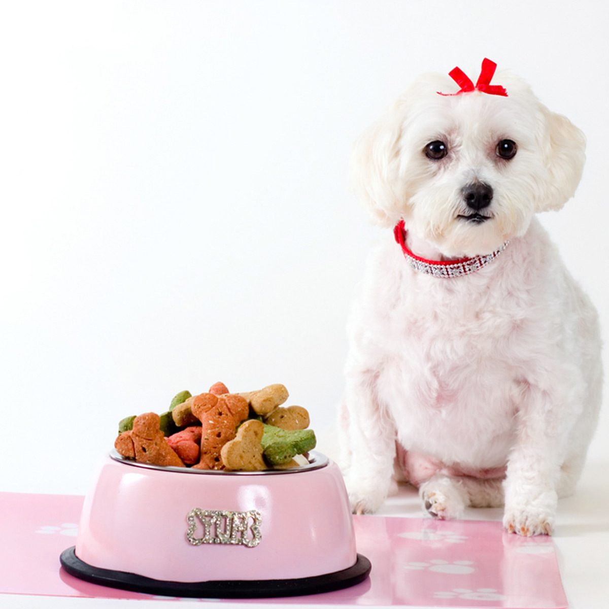 dog pet placemat food
