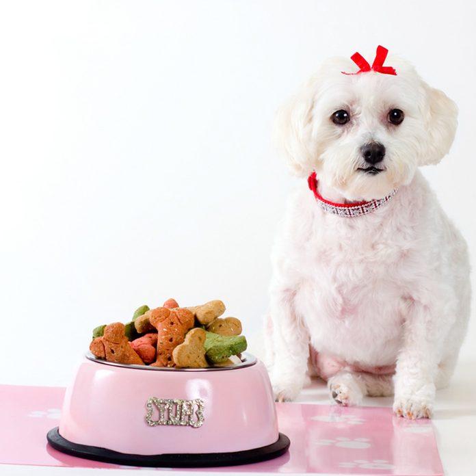 dog pet placemat food