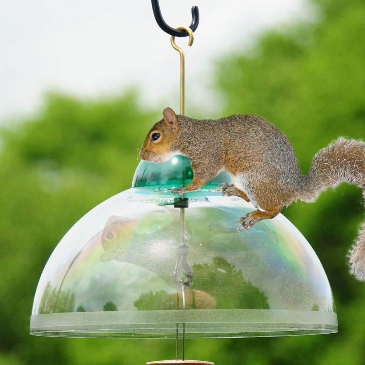 squirrel baffle