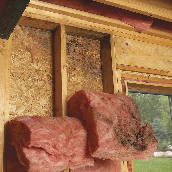 mold on exterior walls