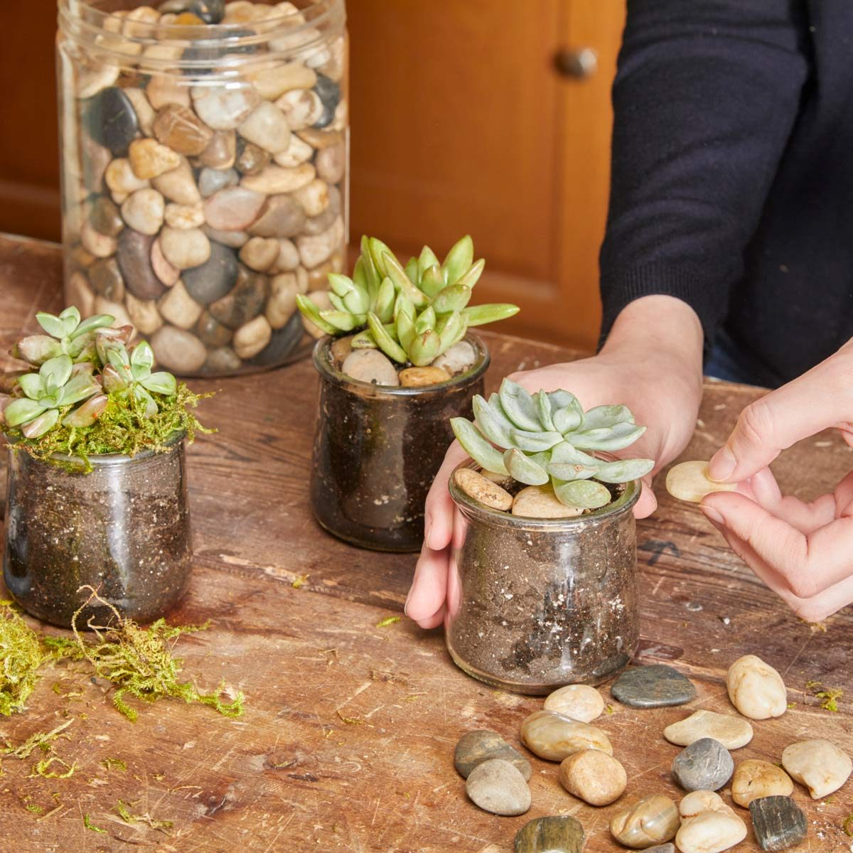 succulents in glass jars add pebbles or moss