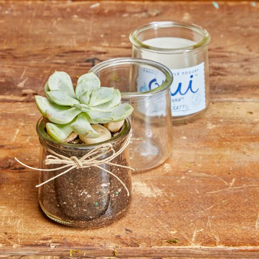 succulents in recycled glass jars oui yogurt