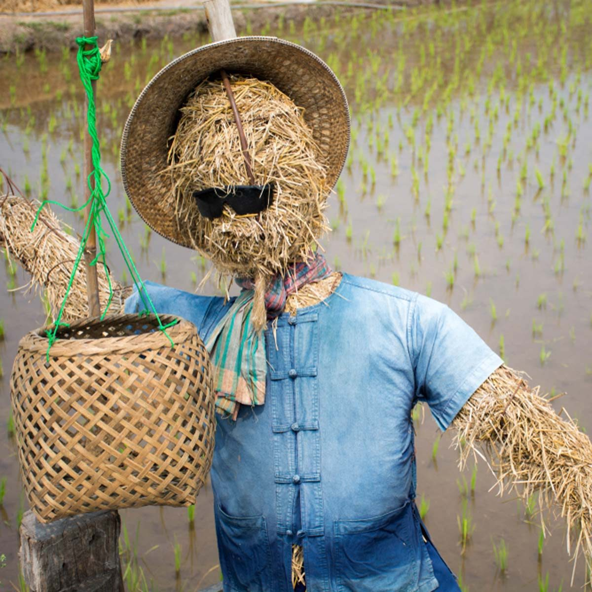 scarecrow with sunglasses