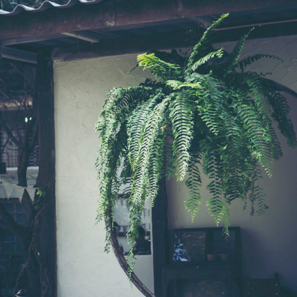 Shady Balcony Garden