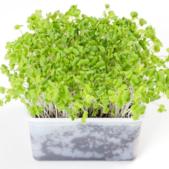 microgreens sprouts growing veggies