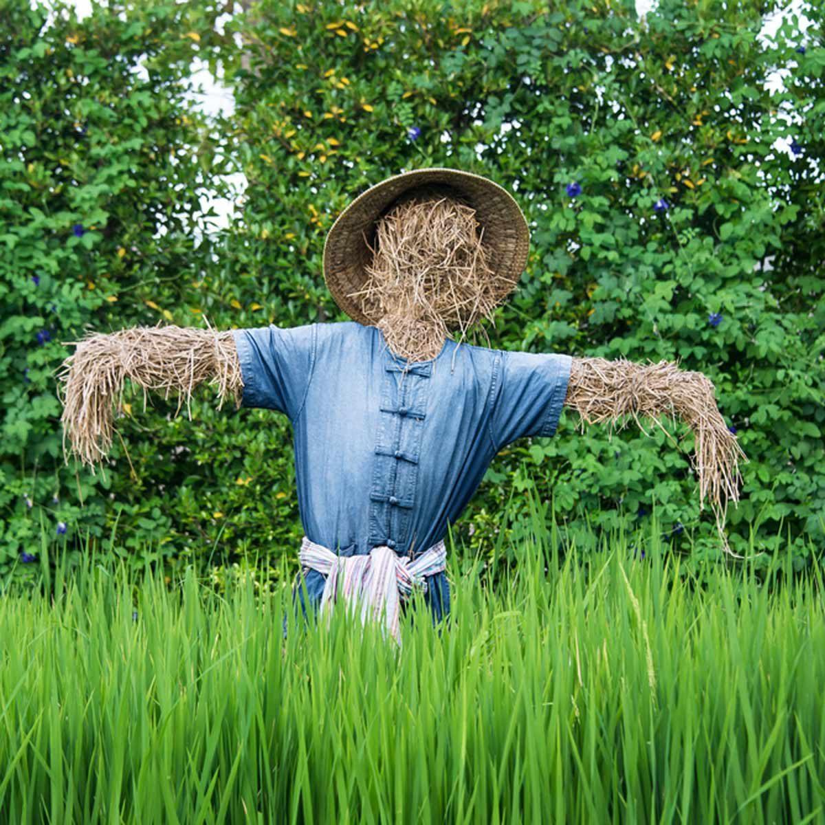 faceless scarecrow