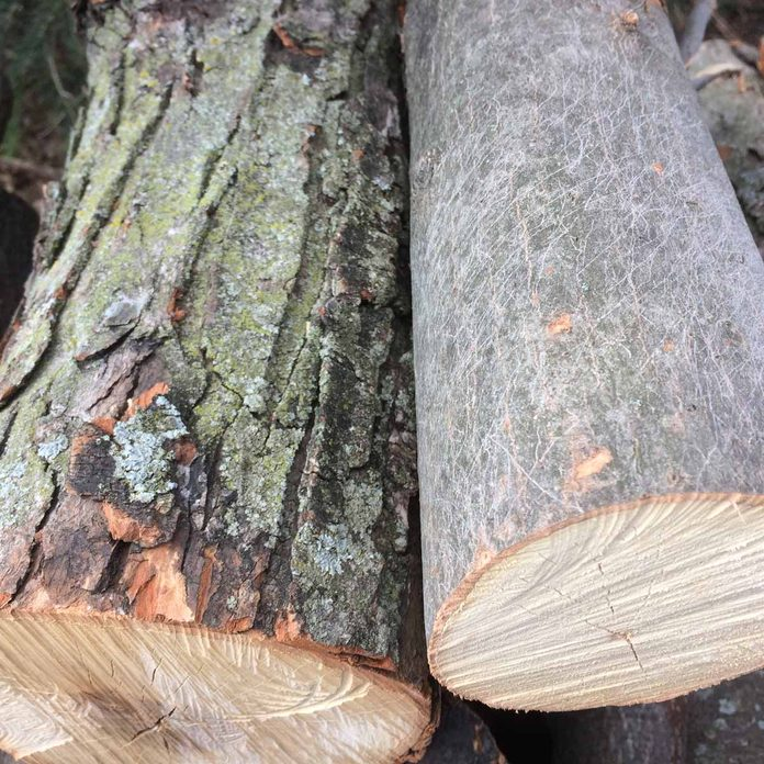 old and new bark