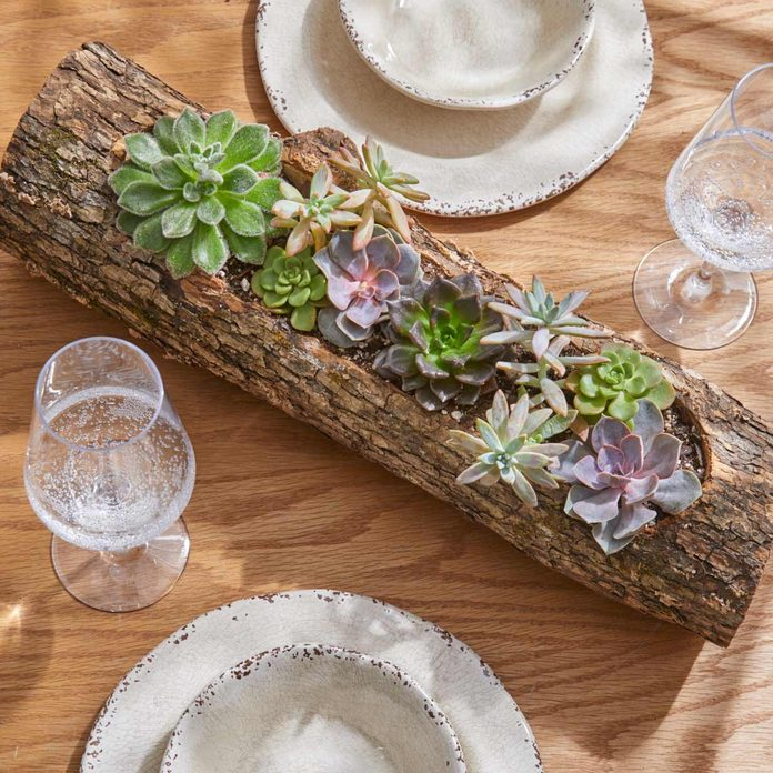 completed shot of succulent log planter above
