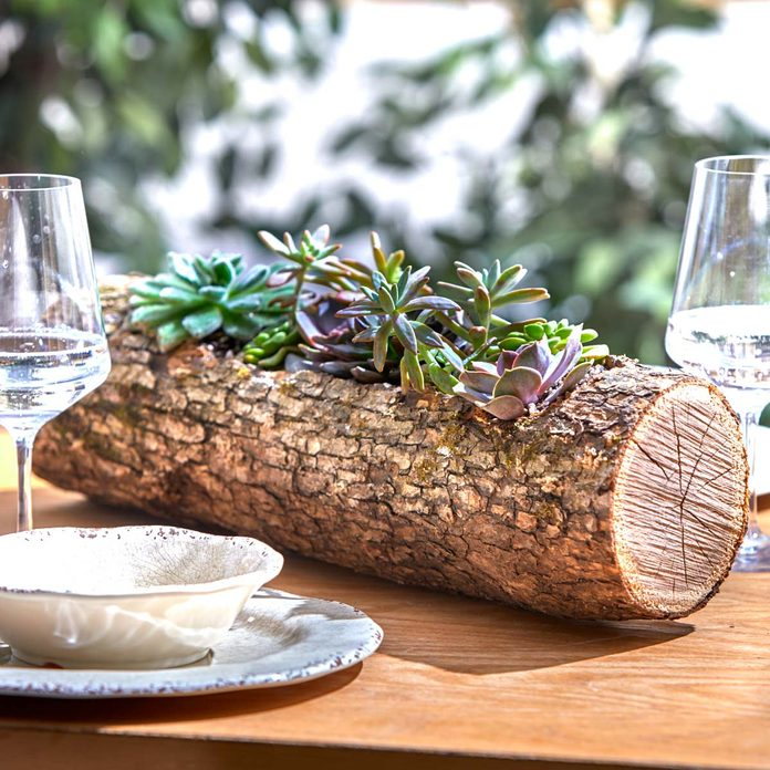 succulent wood log planter finished shot