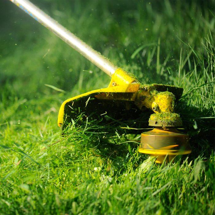 Lush lawn trimming
