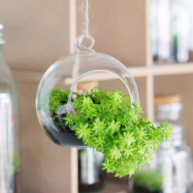 plant how to hang plants indoors
