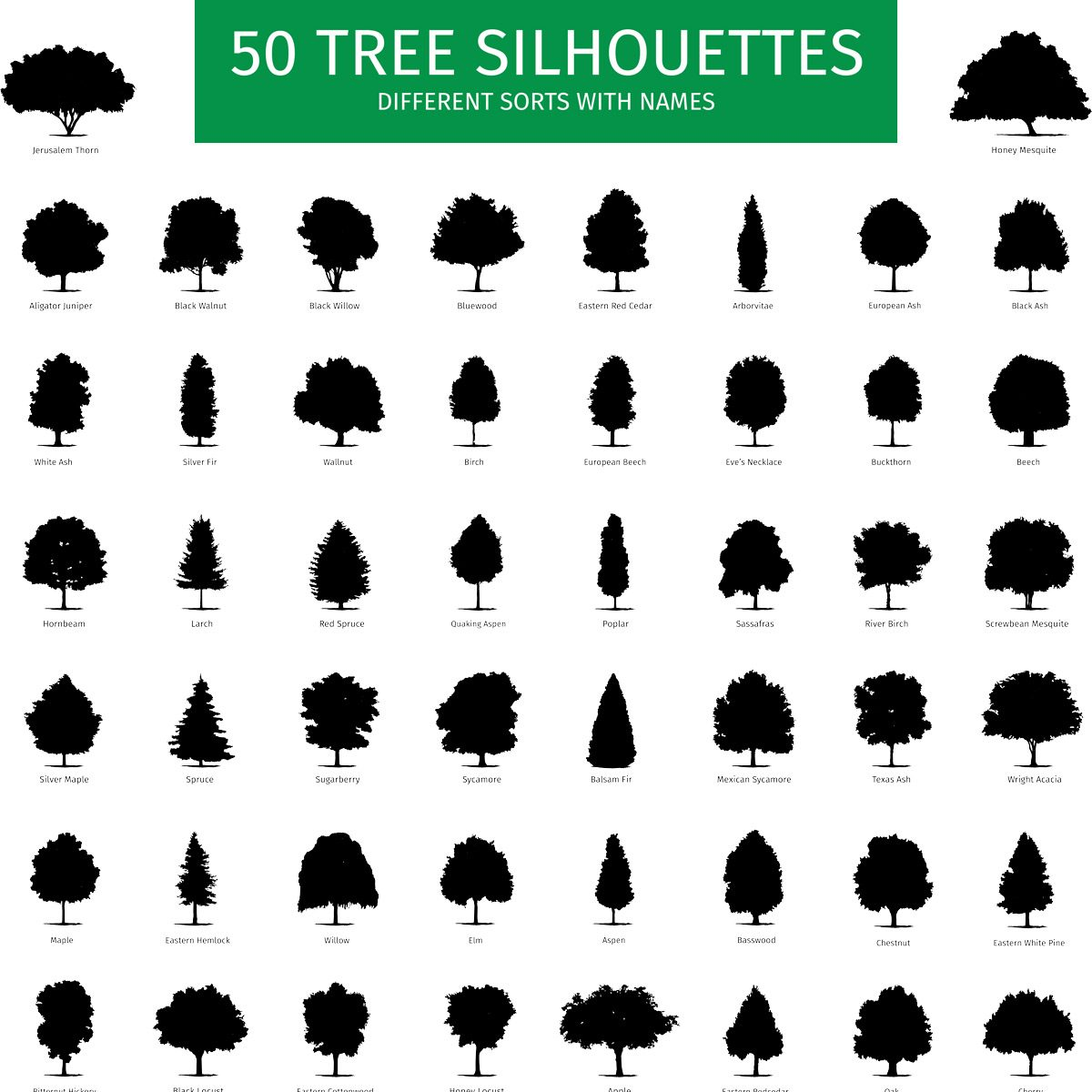 Different shapes of 50 types of trees