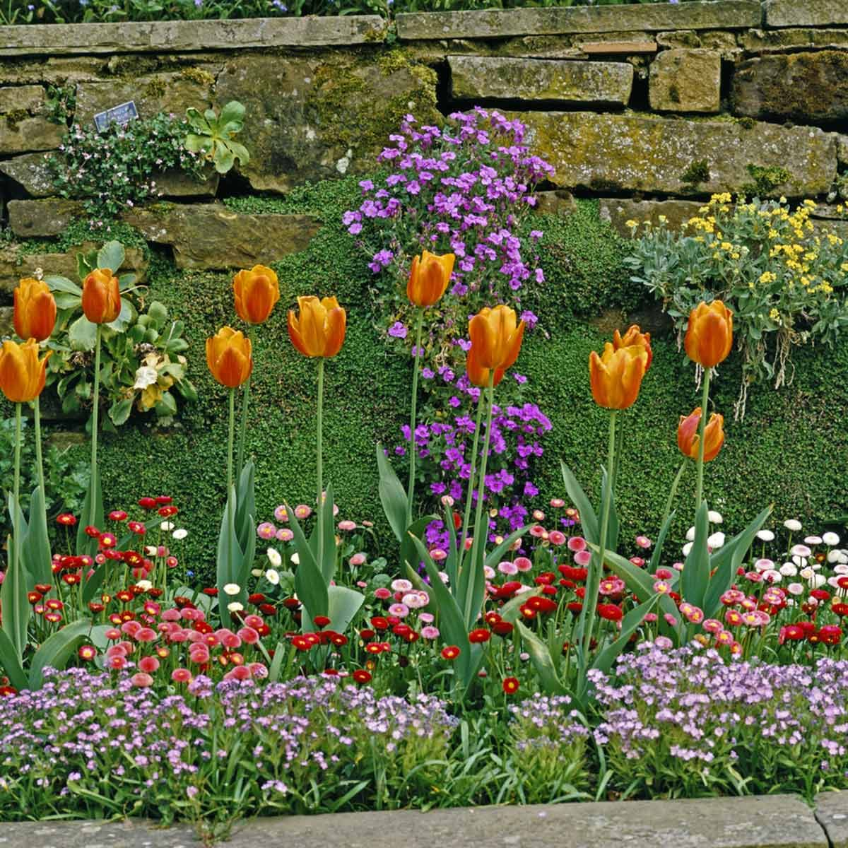 small yard landscaping ideas with colorful flowers of varying sizes