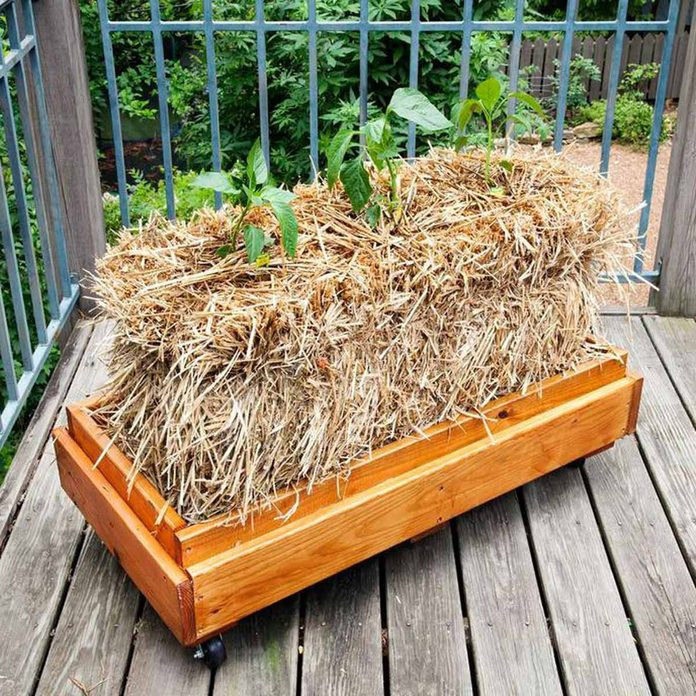 straw-bale planter