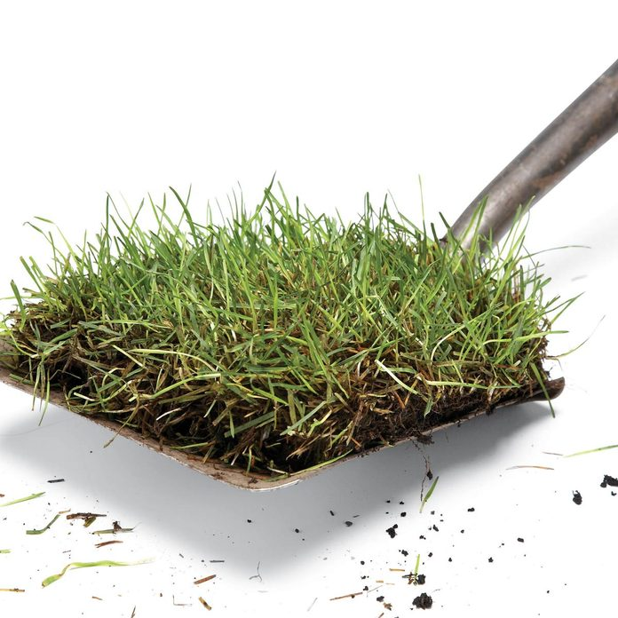 shovel sod grass remove sod