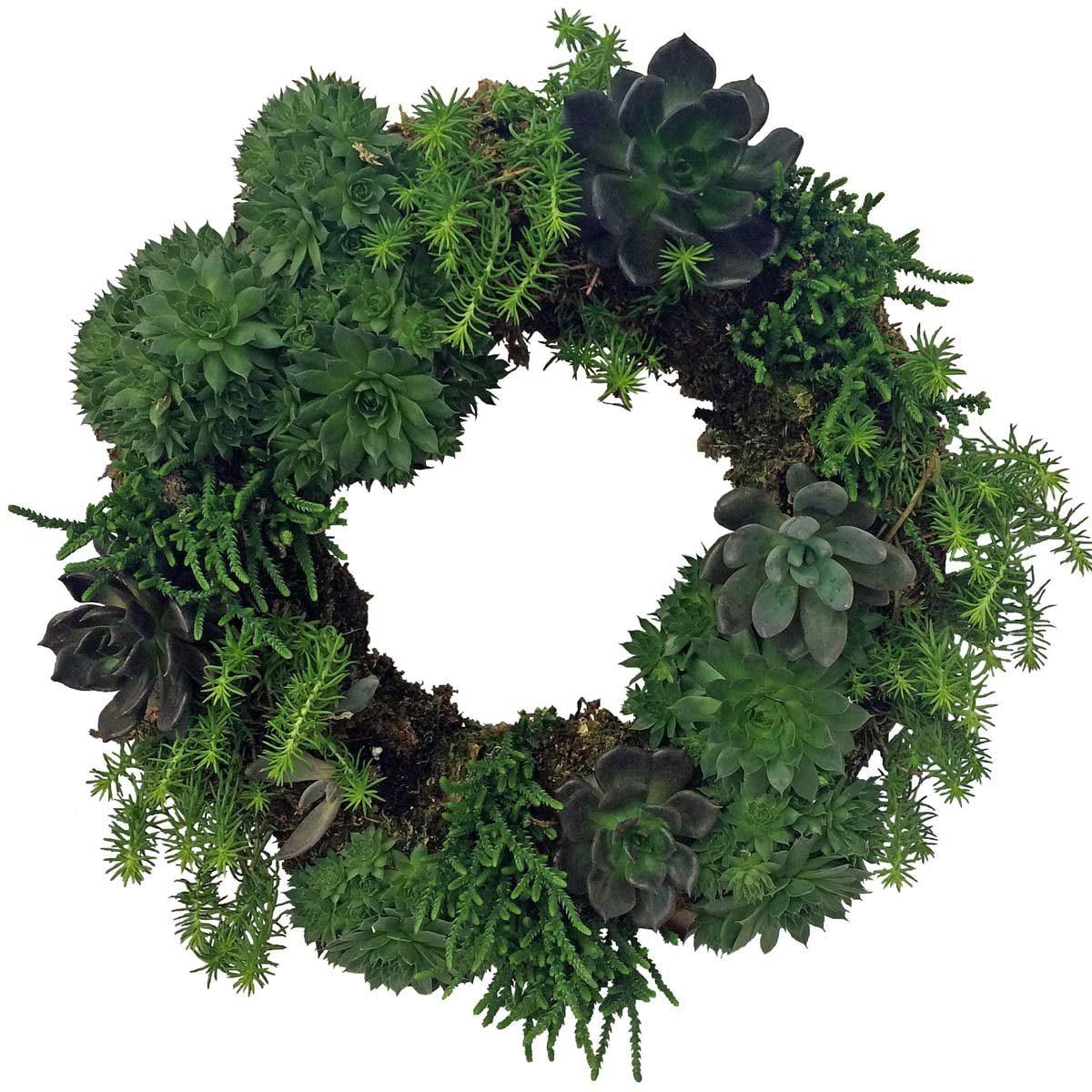 Succulent wreath