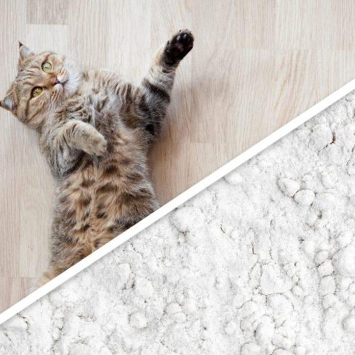cat baby powder