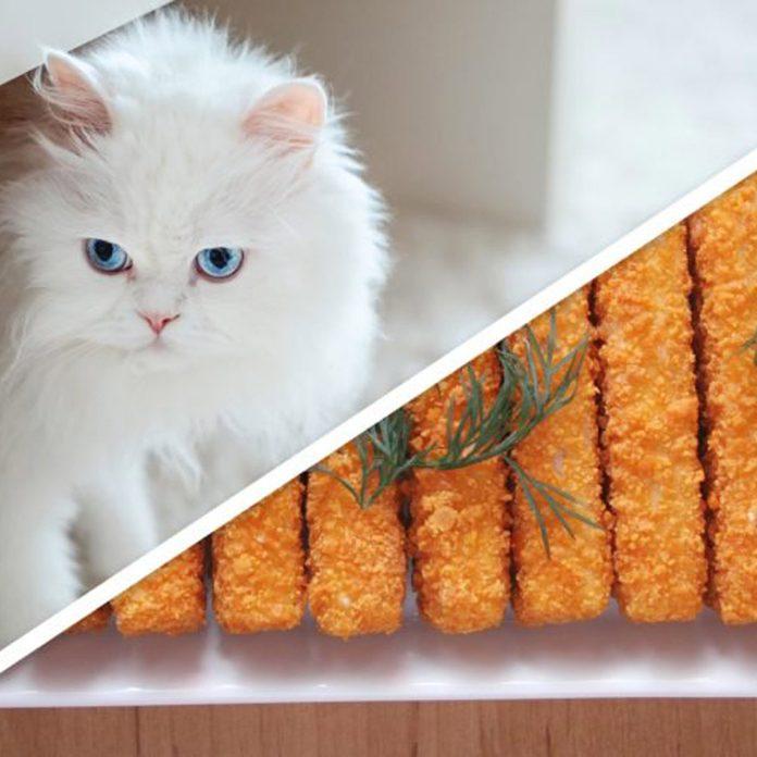 cat fish sticks