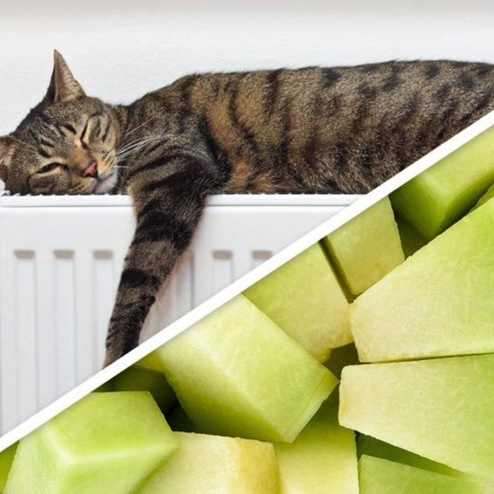 cat melon