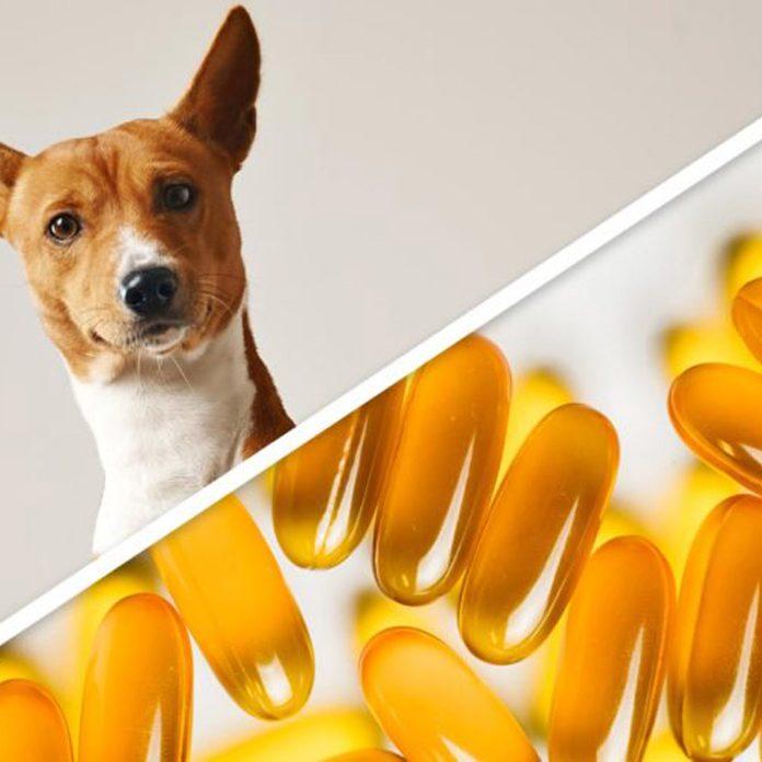 dog pills