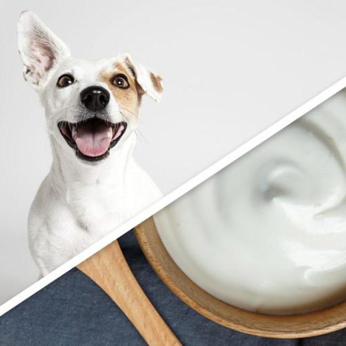 dog yogurt