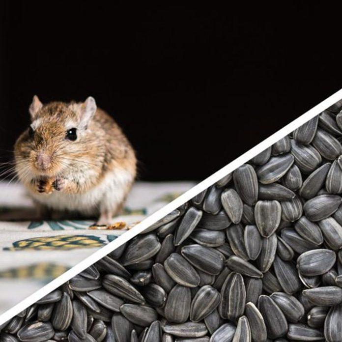 gerbil seeds