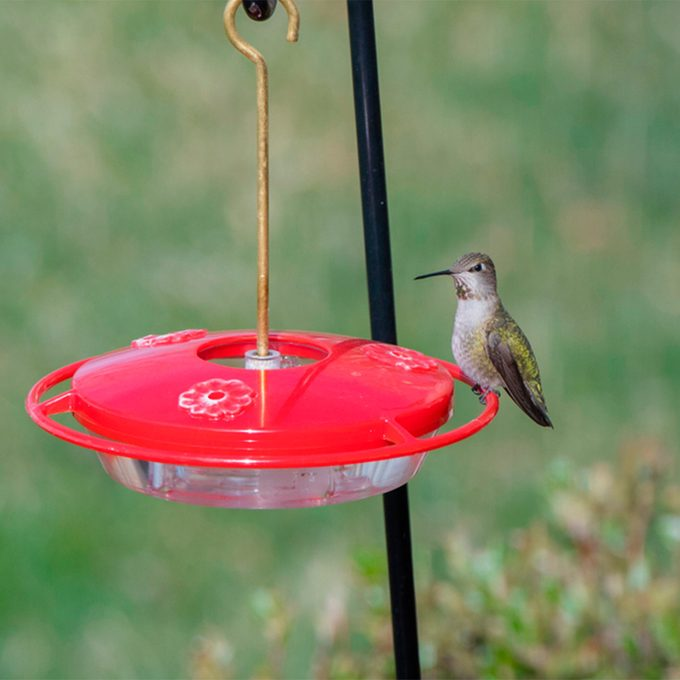 hummingbird on feeder