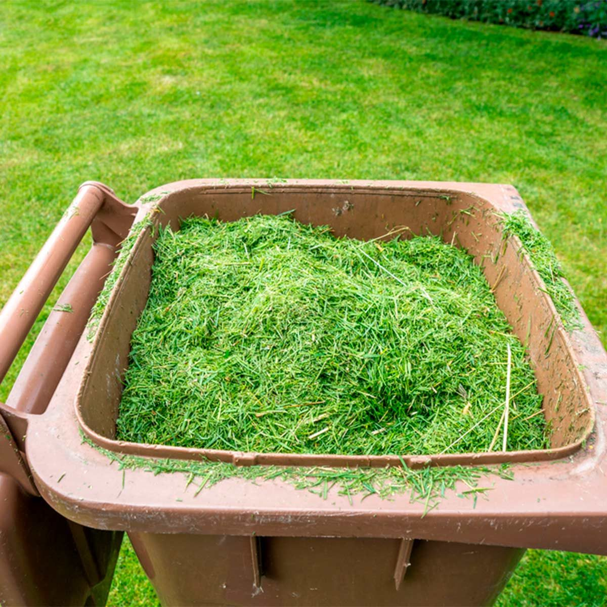 bin of grass clippings