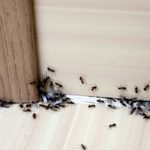 How To Quickly Get Rid of Ants