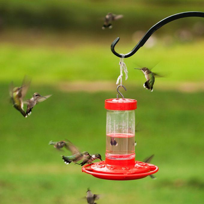 many hummingbirds fighting